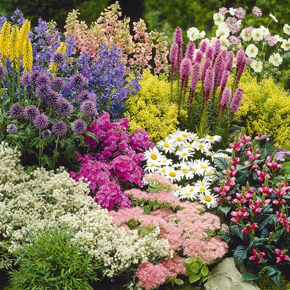Cottage Garden Our Selection 18xP9