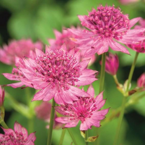 Chatsworth Show Pollinators(18)
