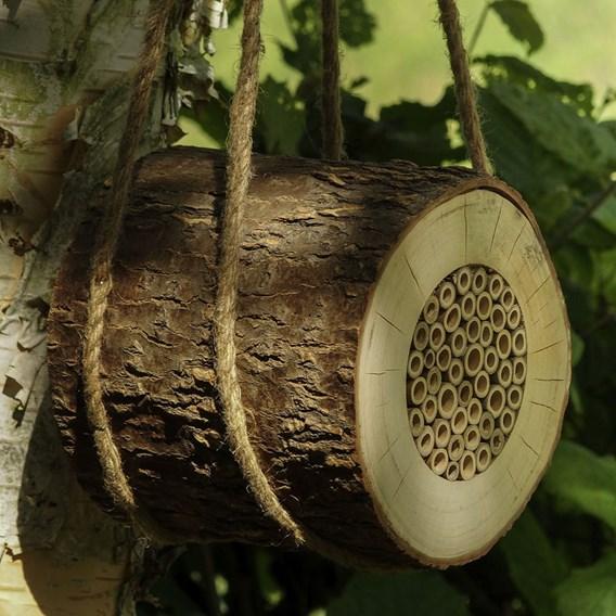 Bee Log Offer