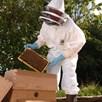 Beekeepers Suit Fencing Hood