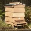 WBC Hive Package no Super & empty 14